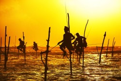 Silhouettes of Sri Lankan Stilt Fishermen